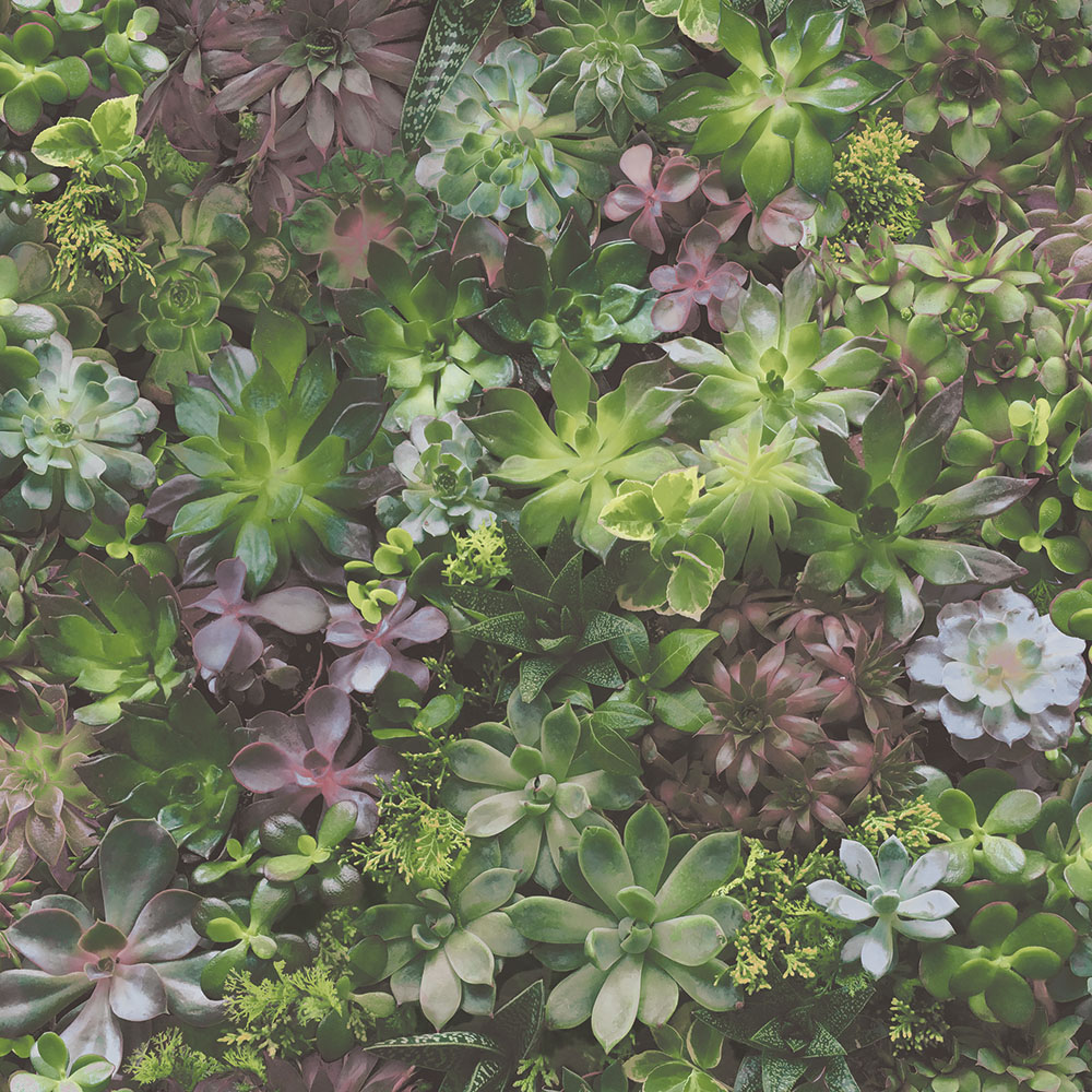 Evergreen-7322